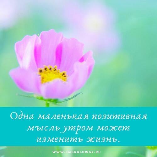 цитата душевный покой и гармония 11